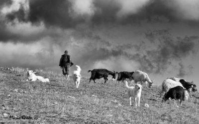 Pastore silano a Lagomar