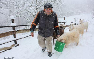 Sila – Allevatore di capre cashmere e produzione di filati a Castagna (CZ)