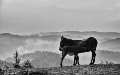 Madre e figlio #amareglianimali