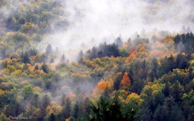 Ultimi giorni d'autunno in Sila
