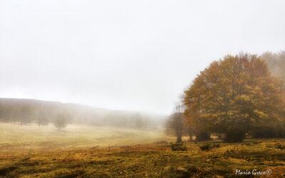 Ultimi giorni d'autunno