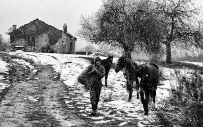 Foraggio per i cavalli in Sila