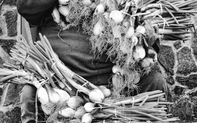 Arcangelo commerciante in cipolle